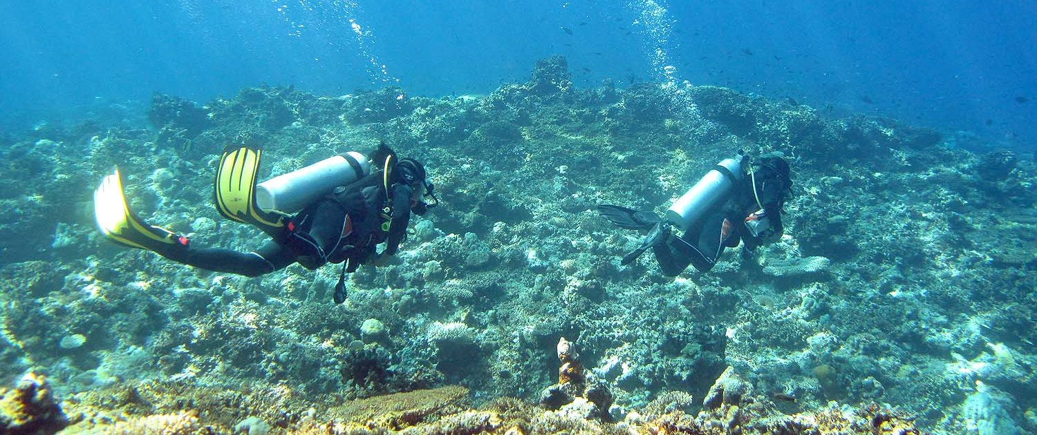 Stingray Divers - Tauchen im Apo Reef, Philippinen