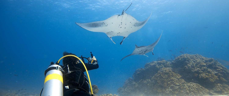 Stingray Divers - PADI Spezialkurs Enriched Air Diver NITROX
