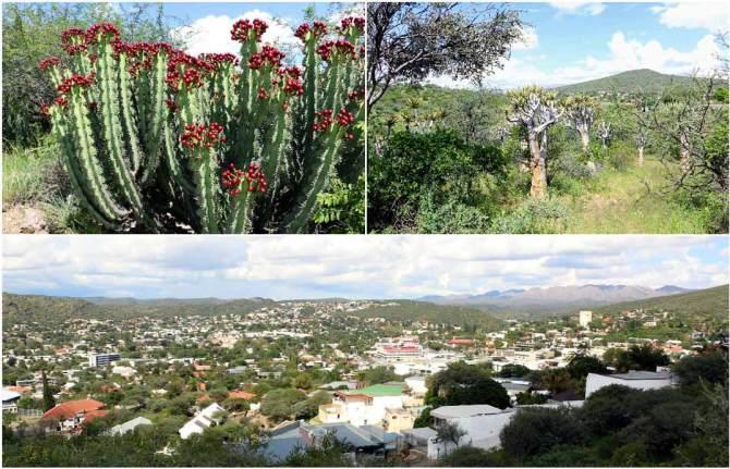 Windhoek Botanic garden.
