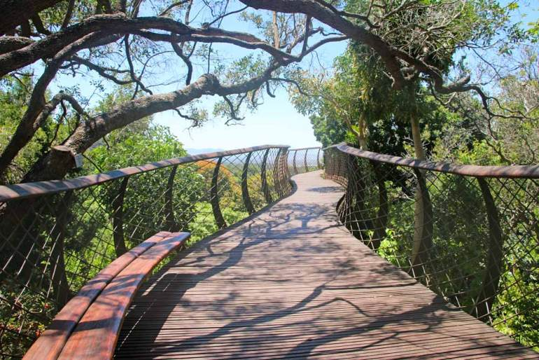 A sky bridge in the tree canopy at Kirstenbosch Garden in Cape Town