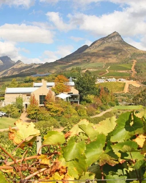 Stunning wine estates around Stellenbosch best things to do in Cape Town