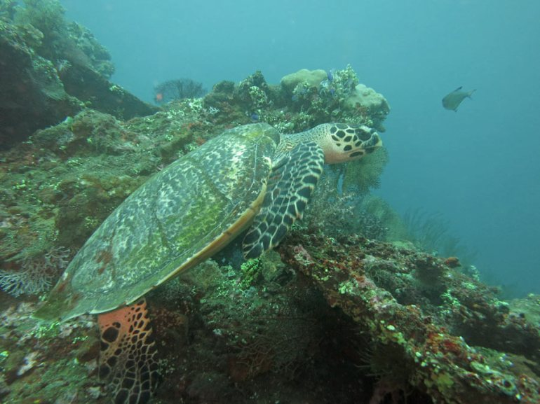 turtle USAT Liberty wreck