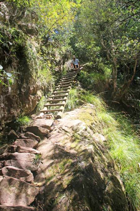 Wooden ladders are a part of the Table Mountain hiking trail from Kirstenbosch