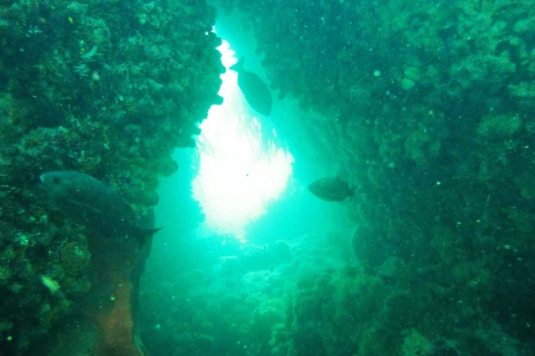 Diving the A-Frame in Simonstown