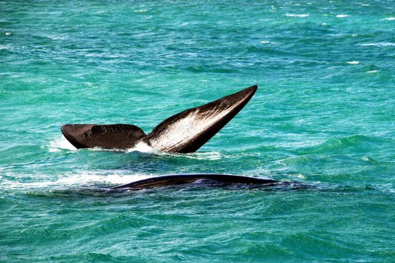 Hermanus whale watching on honeymoon in Cape Town