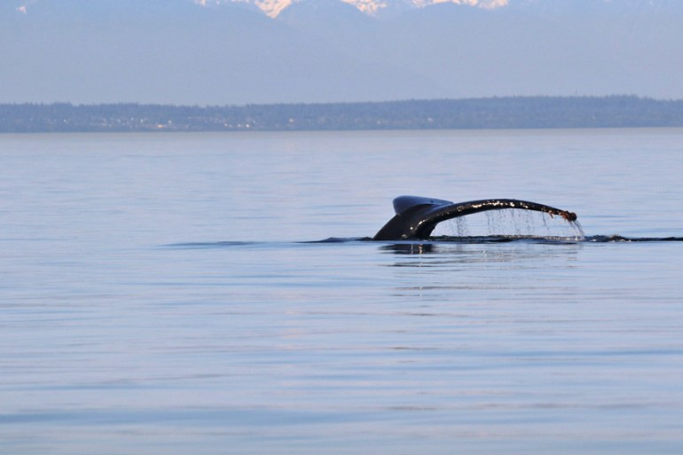 Whale watching from Vancouver