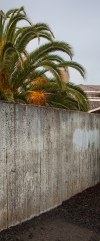 wall and palm
