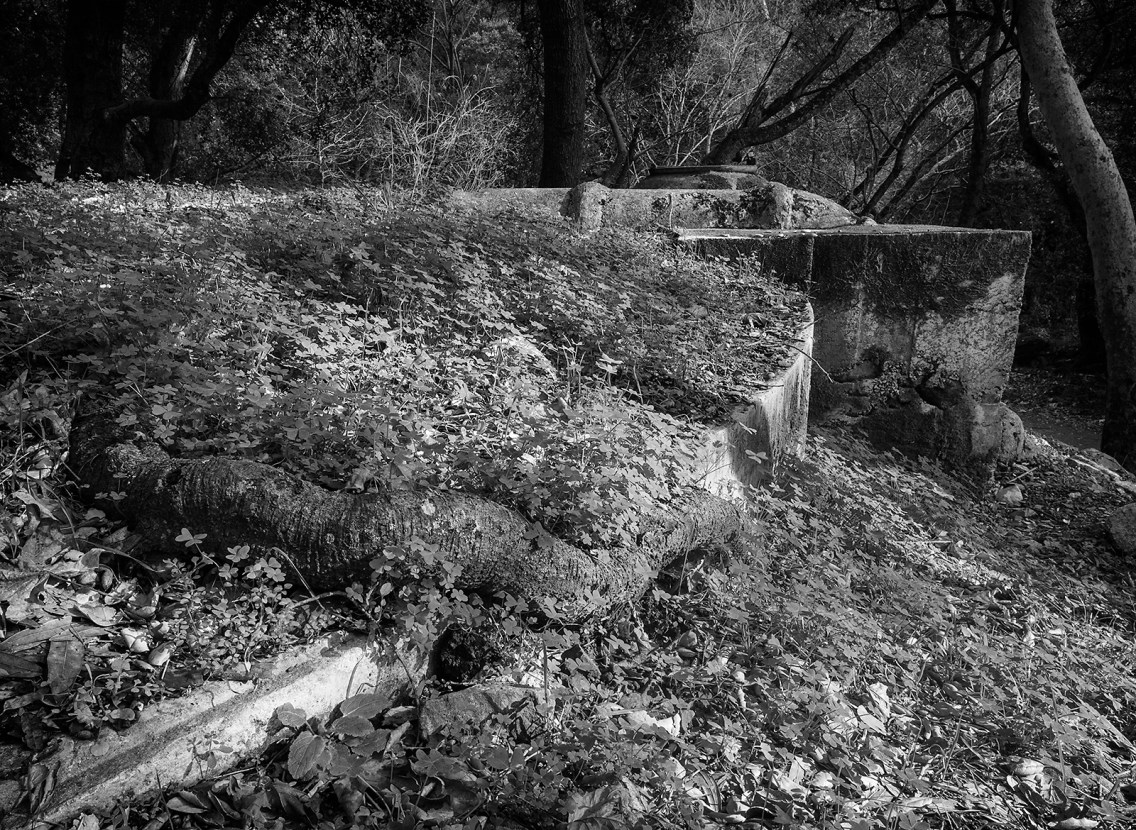 Vegetation overtakes an abandoned water system