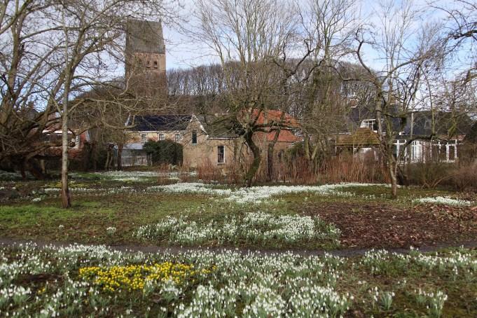 Sneeuwklokjes meanderend door de tuin van Stinze Stiens