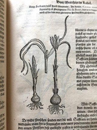De Lobel, Cruydtboeck (1581)