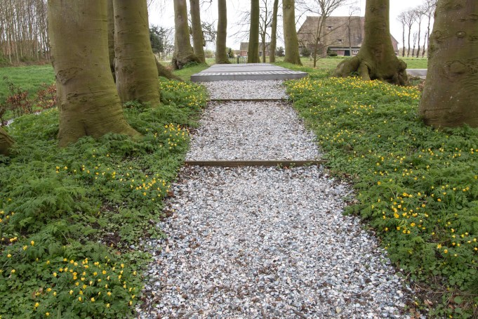 Gele anemoon bij de grafheuvel bij Martenastate.