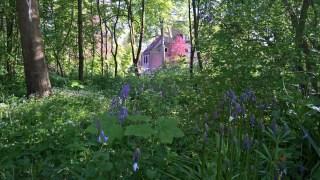Wilde hyacint en Lievevrouwbedstro bij Dekema State
