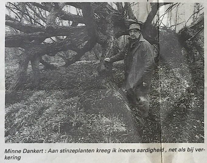 Minne Dankert voor de Kaukasische vleugelnoot in de tuin bij het Doktershûs. Artikel W. leukers-ten Bosch, 'Stinzenplanten op hun hoogtepunt', krant onbekend, rubriek 'gezin en samenleving, 20 april 1996, p. 24.