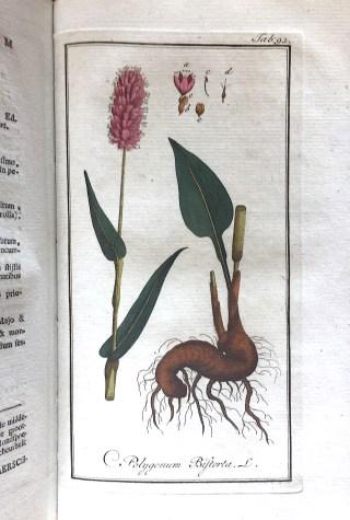 Common Bistort (Persicaria Bistorta), in the past 'Polygonum Bistorta' in: Afbeeldingen der Artsenygewassen, Amsterdam (J.C. Sepp en Zoon), 1796.