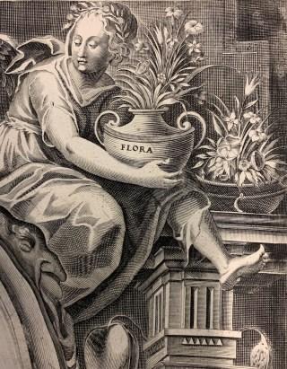 Flora, Besler Hortus Eystettensis