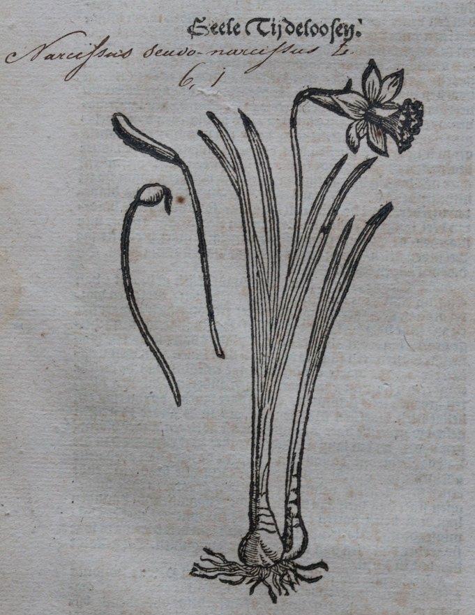 'Cruydt-boeck van Rembertvs Dodonævs'