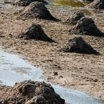 Maulwurf-Wettbuddeln im Mockritzer Bad