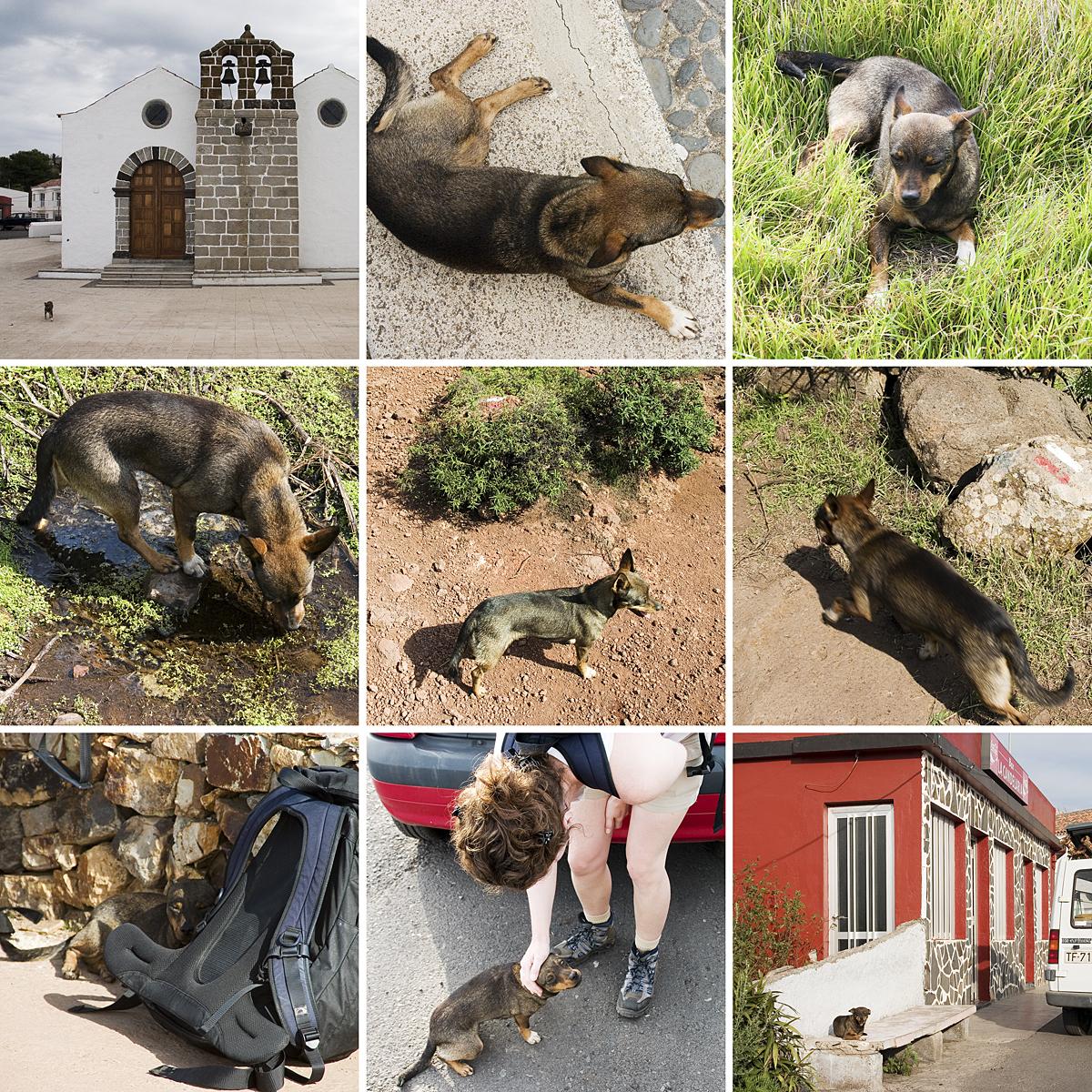 Mit dem Wanderhund zum Garajonay