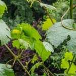 Kultur und Wein im Königlichen Weinberg