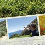 Weinberg mit Ausblick auf Salina