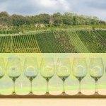 BW-Classics: Von Wein und Winzern