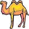 camel100