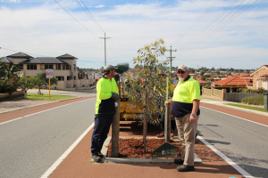 City of Stirling staff tending to a much needed tree in Amelia St, in Balcatta