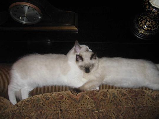 Malcolm & Sophie
