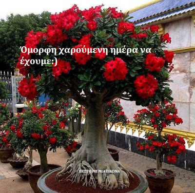 Read more about the article Όμορφη χαρούμενη ημέρα  να έχουμε…!!! 🌷🌷🌷🌷
