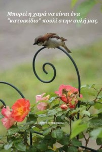 "Read more about the article Μπορεί η χαρά να είναι ένα ""κατοικίδιο"" πουλί στην αυλή μας."