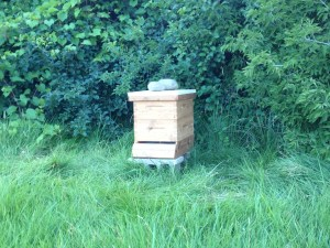 Honey bees at The Farm at St. Joe's have all died the past four years.