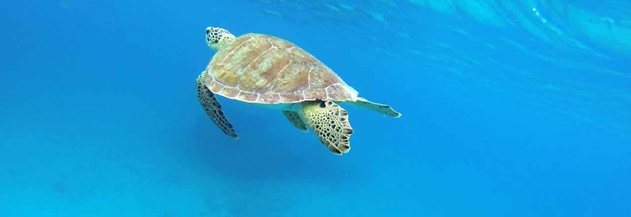 sea-turtles-stjohn-header