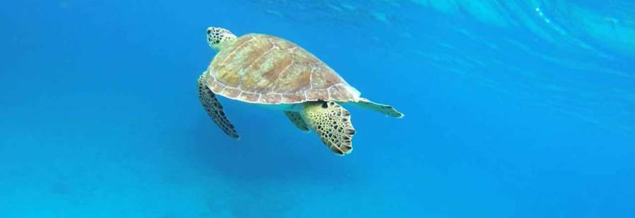 sea-turtles-stjohn-header