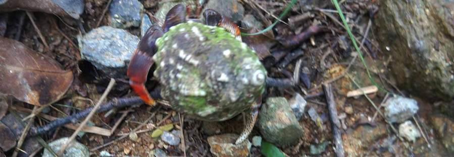 hermit-crabs-stjohn
