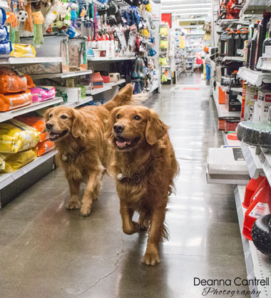 Penny and Pickles in the aisle at Ace Hardware in St. Johns