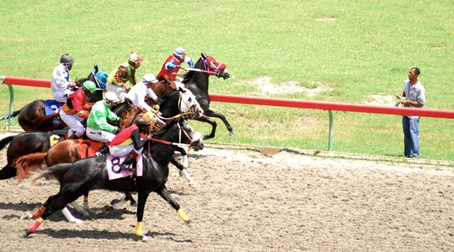 Horses race at St. Croix's Randall 'Doc' James Racetrack. (File photo)