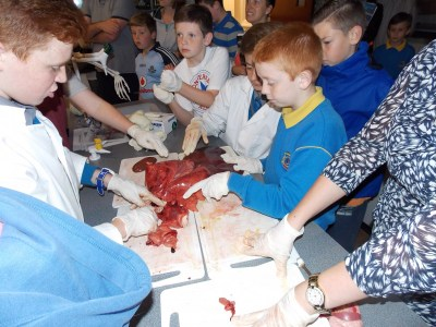 Students explain the internals organs of a pig or sheep