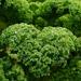 Kale Skin Care