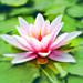 Water Lily Extracts Skin Care