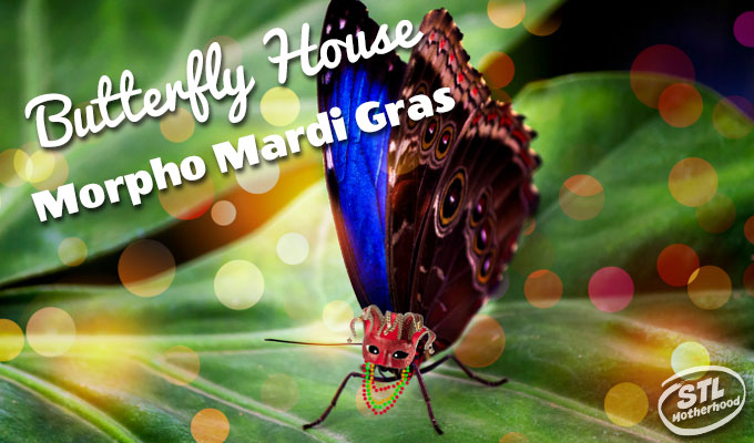 Morpho Mardi Gras at the Butterfly House