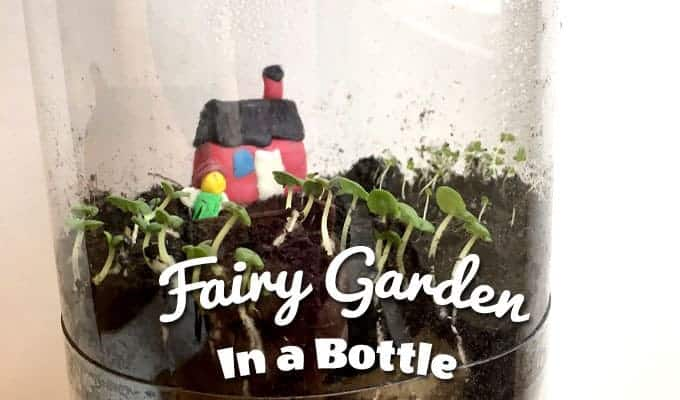 fairy garden in a soda bottle stem project