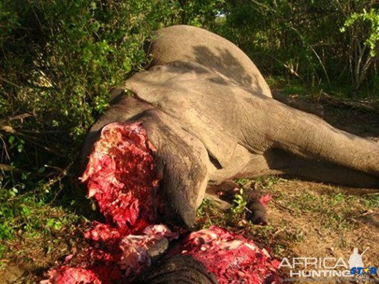 Blood Ivory: It is estimated that 23,000 African elephants were slaughtered in 2013 for their tusks, generating over a billion dollars in black market revenue.
