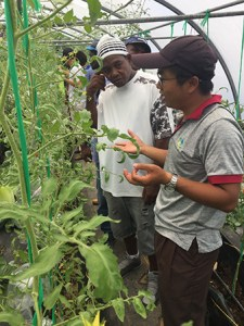 Taiwan expert taught local farmers the know-how in greenhouse tomato production