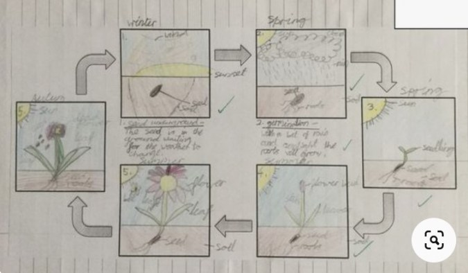 life cycle presentation3