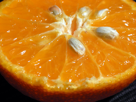 orangepips