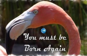 Picture of a flamingo for the born again bs