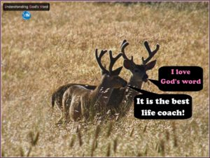 Picture of deer in dry field for the understanding god's word bs