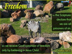 picture for freedom - zebra at sf zoo