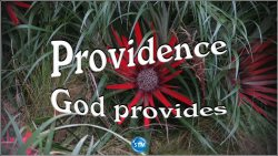 Picture of red flower for the providence bible study