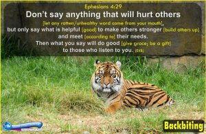 picture of bengal tiger at san francisco zoo for the backbiting bible study